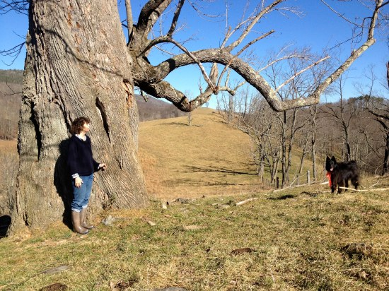 Author measures herself against the tree. Belle the dog observes.