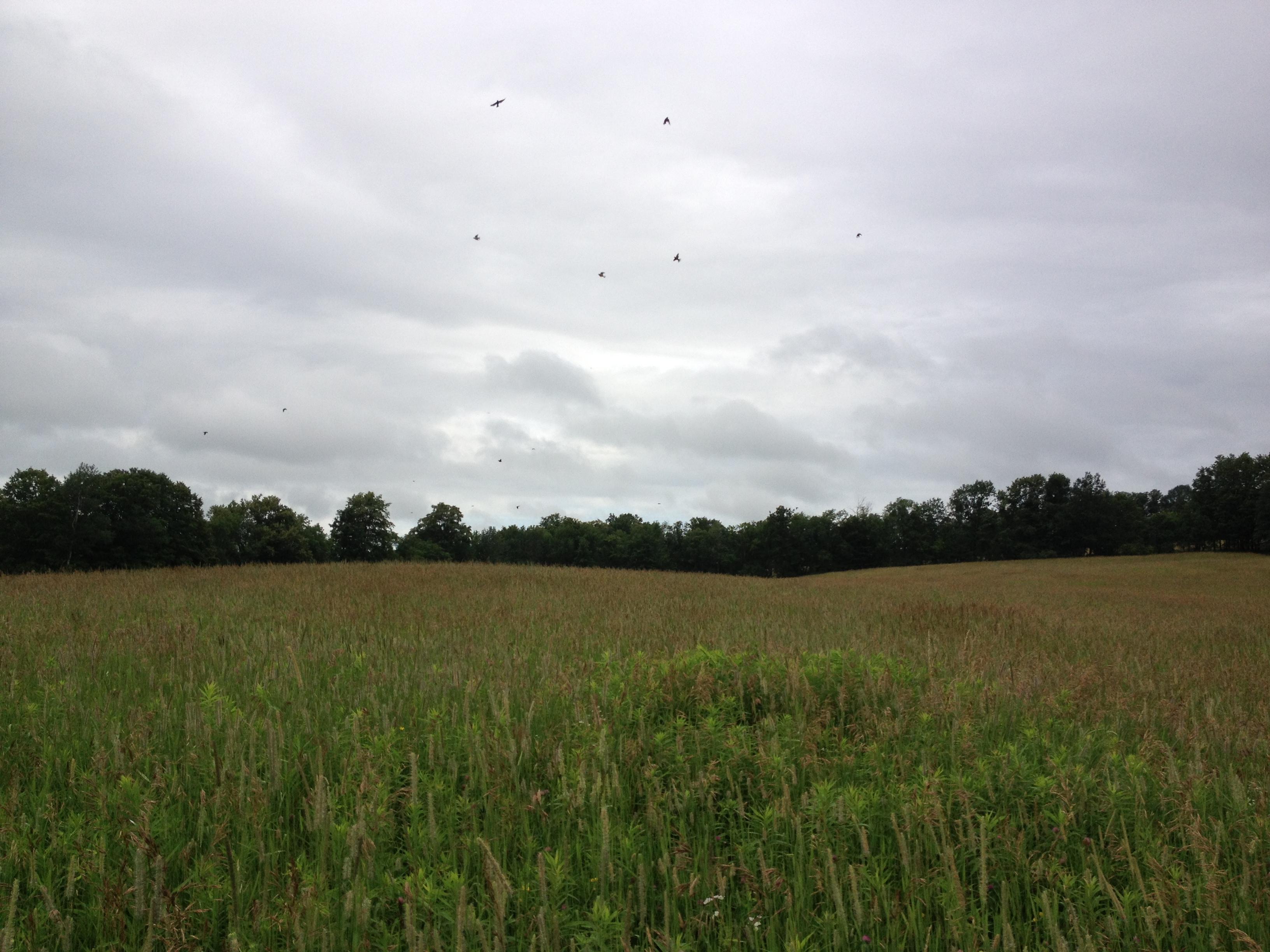 Fledglings in the sky.