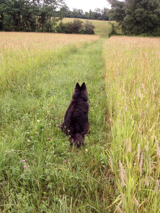 Belle the dog in Bobolink Alley.