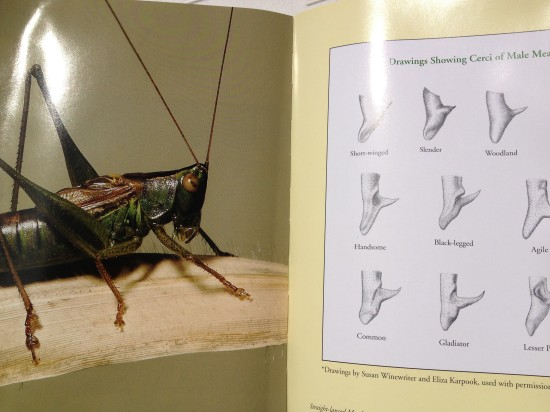 Pages from The Songs of Insects by Wil Hershberger and Lang Elliott
