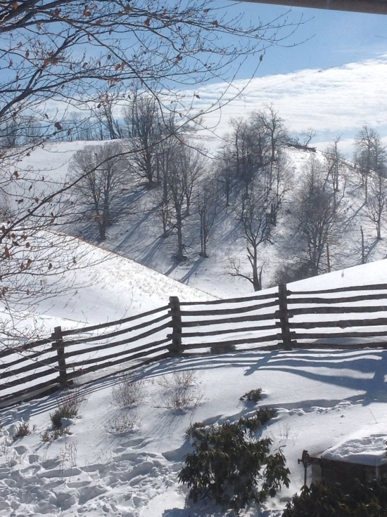 Trees on flank of Stark's Ridge cast shadows. Top of hill is Lawson's Knob (named after John S. Lawson).