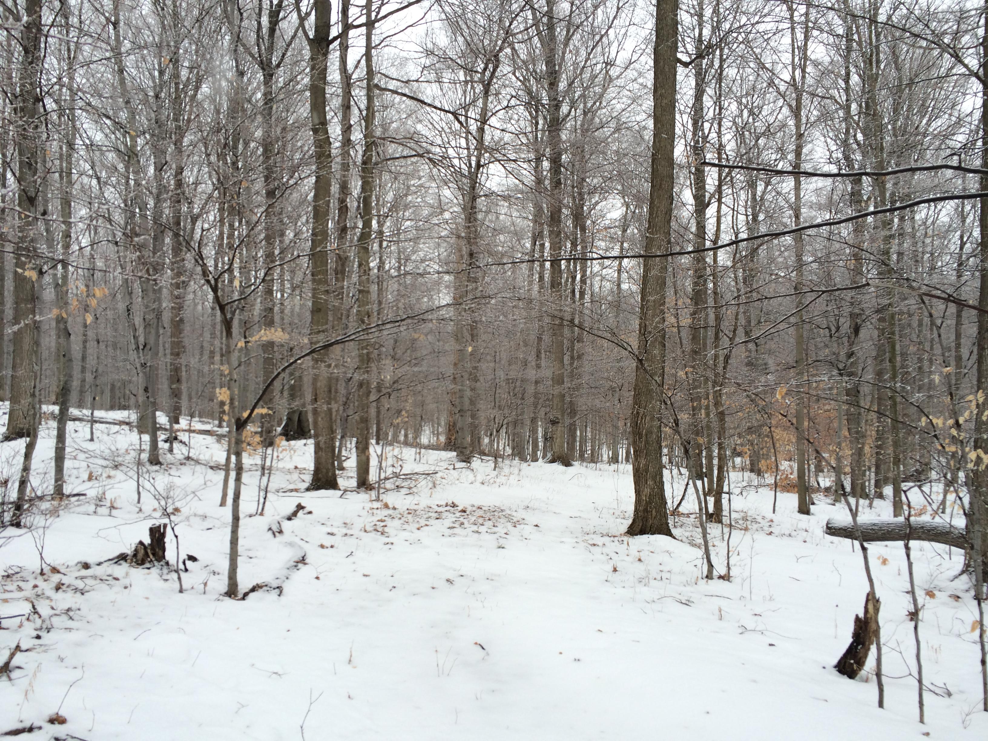 2014 February « elizabeth winpenny lawson …writing as a naturalist