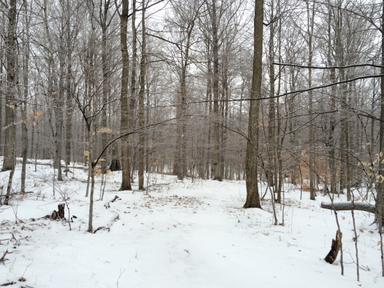 A light snow covers every branch of forest trees.