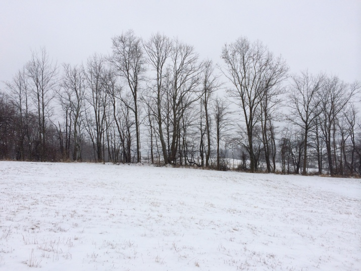 Hedgerow in winter.