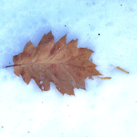 Winter leaf lies quietly.