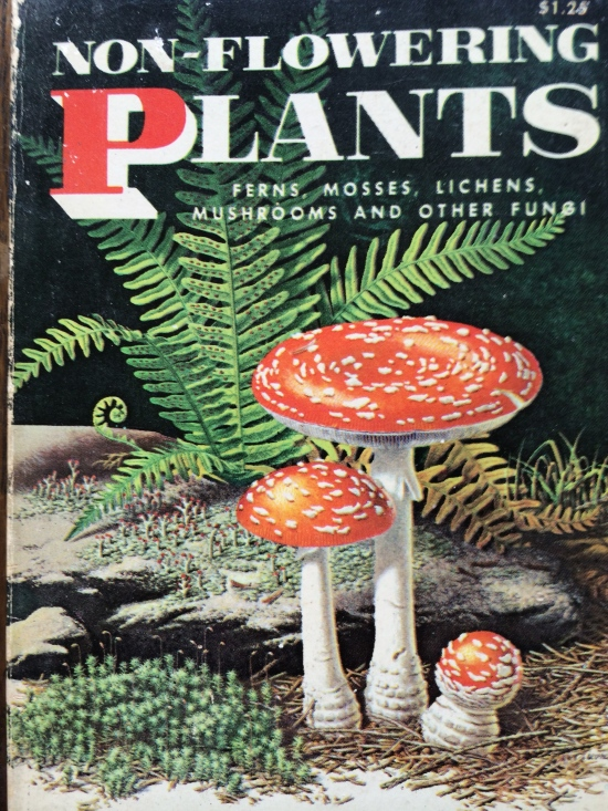 Non-flowering Plants, a Golden Nature Guide by Floyd S. Shuttleworth and Herbert S. Zin.
