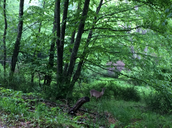 Deer in the undergrowth.