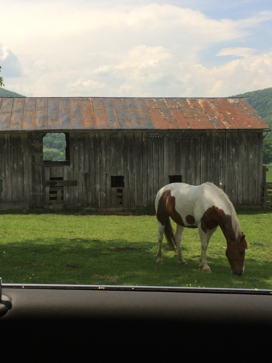 Back to the beginning. A horse grazes. Vanderpool gap visible through window in barn.