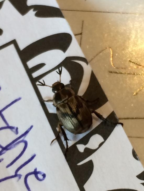 Beetle on calendar.