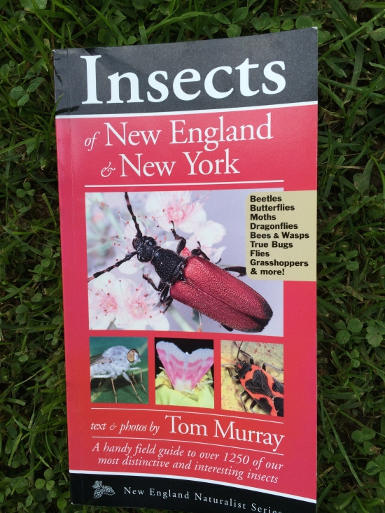 Insects of New England and New York by Tom Murray, published by Kollath + Stensaas Publishing.