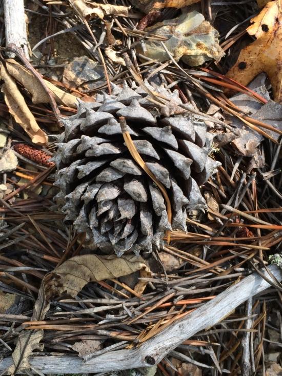 Pine cone.