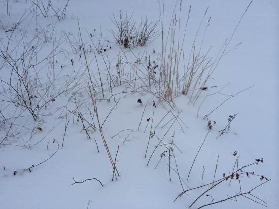 Winter weeds: a chiaroscuro.