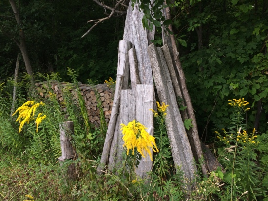 Goldenrod and woodpile.
