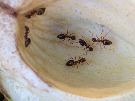 Ants in close contact as they explore the inside of the shell.